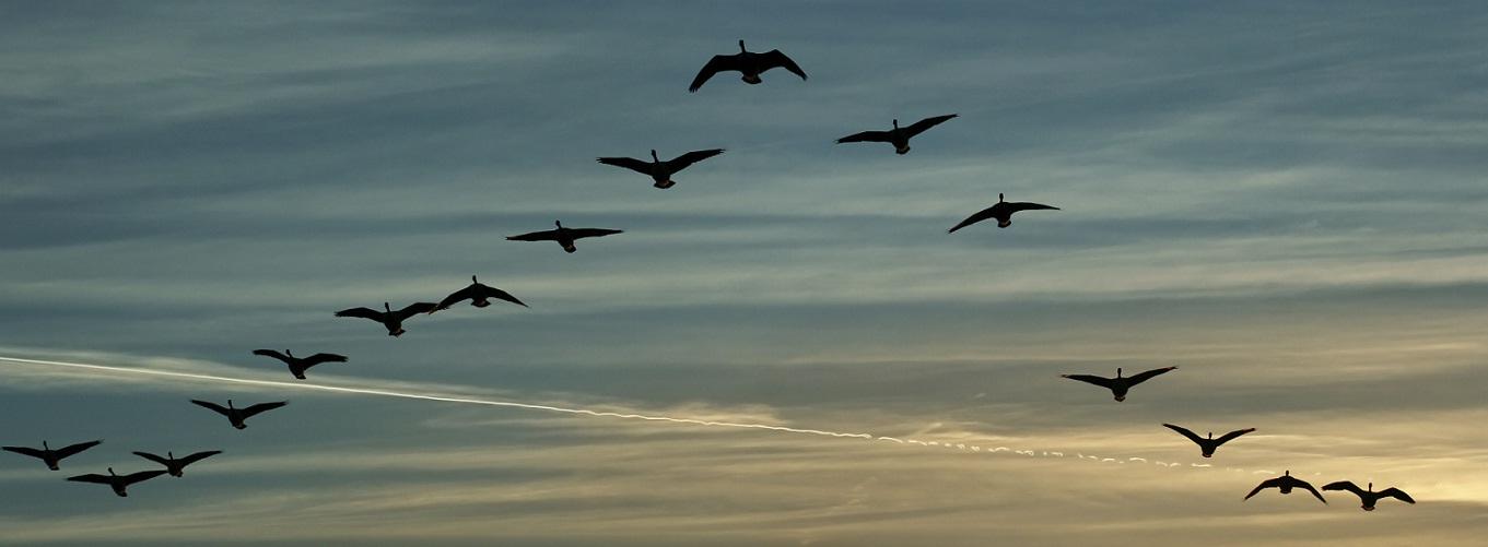 slide-1-TAM-birds